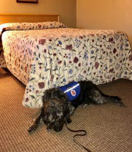 koahberry-dog-service dog-motel-working-koah